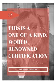 When you enroll in this, one-of-a-kind, unique and extremely fun BuildingBlock™ Certified Equine-Assisted Learning Program© you will learn how four‐legged teachers assist participants in learning the power and strength of nonverbal communication. #equineconnection