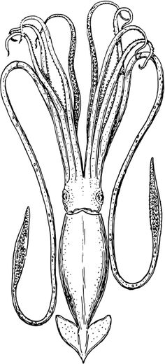 Colouring pages embroidery line art on pinterest dover for Giant squid coloring page