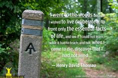 10 Photos That'll Make You Want to Thru-Hike the Appalachian Trail Today Thoreau Quotes, Hiking Quotes, Inspirational Quotes With Images, Thru Hiking, Happiness, Henry David Thoreau, Word Pictures, Appalachian Trail, Nature Quotes