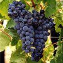 Las propiedades nutricionales de las uvas ecoagricultor.com