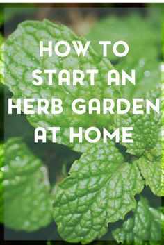 Have you ever thought about starting an herb garden at home? Be sure to check out this post for the best types of herbs to start with.