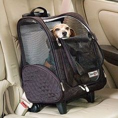 The Snoozer Wheel Around Travel Pet Carrier is a comfortable and convenient way to carry your pet while travelling. This pet carrier is compact to carry in a car or airplane.nnThe Wheel Around Travel Dog Travel Carrier, Airline Pet Carrier, Cat Carrier, Pet Travel, Travel Bag, Pet Car Seat, Car Seats, Dog Stroller, Trolley Case