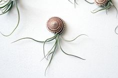 jellyfish friend no1 // air plant // by by peacocktaco on Etsy, $18.00