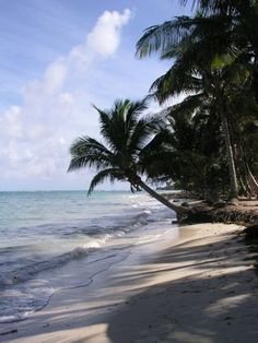 Island beach, Little Corn Island Beach and Bungalow that features cabins on the a remote tropical beach. Little Corn Island, Beach Bungalows, Island Beach, Ocean Beach, Garden Inspiration, That Way, Caribbean, Beautiful Places, Things To Come