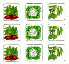Rasli4nie Lottos i Igri-Lotto - Aleiga V. - Picasa Web Albums