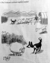 Image result for border collie cartoons