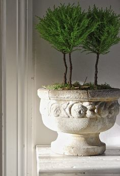 Urn with topiary as decor accessory Urn Planters, Indoor Planters, Indoor Garden, Indoor Trees, Potted Trees, Garden Urns, Topiary Garden, Vases, Contemporary Garden