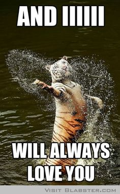 Romantic Water Tiger #funny