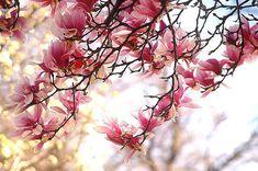 Imagini de primavara - poze cu flori Hold My Hand, Someone Like You, Let Them Talk, Nature, Beautiful, Bond, Facebook, Heart, Google