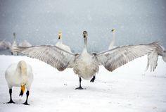 这个冬季,带你领略祖国生态之美! - 新华网新时空