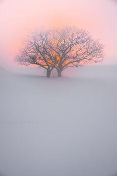 Sunset in tree, Chitose, Hokkaido, Japan
