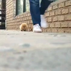 Look at this walking potato 🥔 - Tiere - Animals Cute Little Animals, Cute Funny Animals, Funny Dogs, Cute Cats, Cute Dogs And Puppies, Baby Dogs, Dachshund Puppies, Pomsky Puppies, Fluffy Puppies