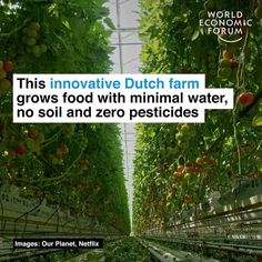 """World Economic Forum on Instagram: """"This Dutch farm produces more food but uses no soil and 95% less water. Watch the latest in our award-winning video collaboration with @WWF…"""" World Economic Forum, Climate Change, Collaboration, Dutch, Water, Life, Slow Living, Instagram, Zero Waste"""