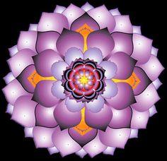 .Purple Mandala
