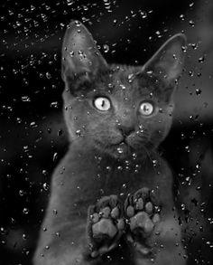 rainy day black cat...