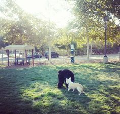 Dog Parks In Moorpark Ca