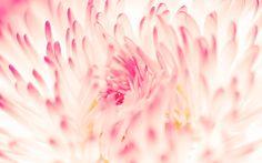 Desktop wallpaper Spring daisy flowers New Flowers designs for desktop background. Spring Flowers Wallpaper, Flower Iphone Wallpaper, Mac Wallpaper, Macbook Wallpaper, Wallpaper Pictures, Flower Backgrounds, Nature Wallpaper, Mobile Wallpaper, Desktop Backgrounds