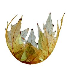 "LEAF BOWL, 2011, Kay Sekimachi, skeleton of big leaf maple, 8"" x 5"" x 5"", 2011, $1,000"