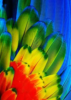 "michaelfitzsimmons:    ""Macaw Feathers VI"". Photo by Michael Fitzsimmons. Full portfolio at www.500px.com/MFitz"