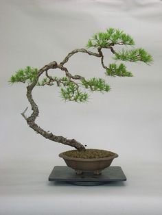 Bonsai!.I really love the look of Bonsai trees.Please check out my website thanks. www.photopix.co.nz