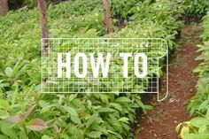 HOW TO: Grow an Edible School Garden - Cities - GOOD