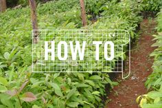 create a school garden. a how to with ideas for a curriculum