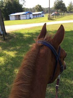 Great place! Black Prong! Obstacle Challenge 2015! #bhfer #horserescue