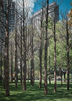 A ghost forest and a predator: New York public art grows a conscience | The Art Newspaper Yale Architecture, Maya Lin, Storm King Art Center, Protected Species, Concrete Sculpture, Park In New York, White Cedar, Cedar Trees, Madison Square