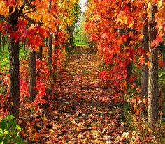 Tuscany, Italy by fiumeazzurro, via Flickr