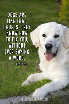 18 Heart Warming Dog Quotes About Life And Love Random Pinterest
