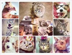 Famous Instagram Pets Adorably Urge You to Adopt One of Your Own | Adweek