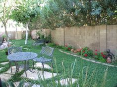 mini clover yard - drought tolerant, no dog spots, no need to fertilize, minimal mowing, will grow in sun and shade