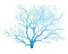 sea fans paintings - Google Search