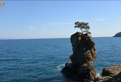 It is bizarre to see a tree on a rock.. Miracles of nature in #Portofino, #Liguria