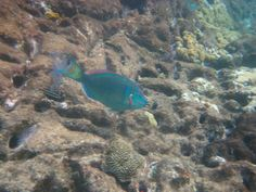 virgin islands fish images | Click here to return to I.D. Top Level