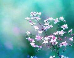 Hey, I found this really awesome Etsy listing at http://www.etsy.com/listing/157082269/botanical-photography-pink-teal-fine-art