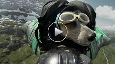 Video: When Dogs Fly – Dean Potter Takes His Dog Whisper BASE Jumping