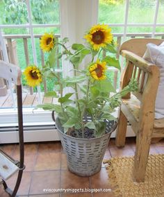 sunflowers & olive bucket  Evi's Country Snippets: