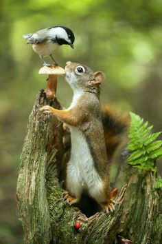 Travel Discover Nature Mushroom bird and squirrel. Nature Mushroom bird and squirrel. Nature Animals Animals And Pets Baby Animals Funny Animals Cute Animals Wild Animals Garden Animals Small Animals Forest Animals Nature Animals, Animals And Pets, Baby Animals, Funny Animals, Cute Animals, Garden Animals, Small Animals, Forest Animals, Exotic Animals