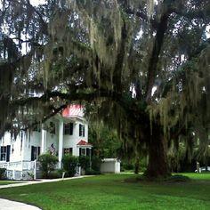 Frampton Plantation  Point South, South Carolina #History #Beautiful #Nature