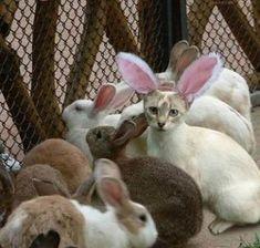 Easter Bunny Spy Cat