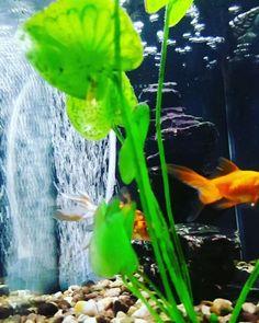 FREEBLUEENERGIE  Freeblueenergy@gmail.com  the fish ensure the purity of the water .... THE FUTURE FOR YOUR POOL  #businessman #work # success #working #grind #founder ##startuplife #startup #money # magazine #moneymarker #globalshift #succesful #passion #inspiredaily #hardwork #hardworkpaysoff #soff #desiree #motivation #happiness #enterpreneur #entrepeneurs #entrepreneurship #entrepreneurlife #business #businessman #businesswoman #quoteoftheday #businessowner  Freeblueenergy@gmail.com…