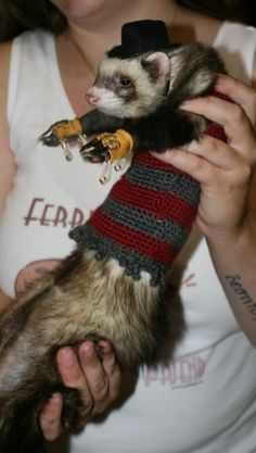 Freddy Krueger Ferret. My ferrets would never sit still for this. It's the cutest ferret costume I've ever seen!