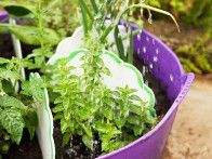 Follow these steps from HGTV Gardens to plant and grow beautiful herbs in pots.