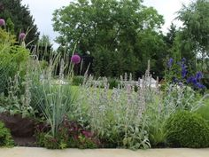 Planting design - Design vegetal gradina naturalist - Poteca Studio arhitectura|design|creatie Business Help, Landscape Design, Plants, Landscape Designs, Plant, Planets
