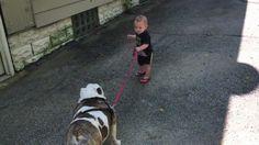 11-month-old trying to walk 80 pound bulldog http://ift.tt/2eKiXZ6