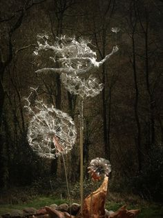 Dramatic Stainless Steel Wire Fairy Sculpture Dancing With Dandelions - Robin Wight