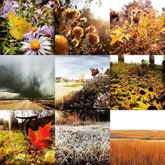 Here are my top 9 images for 2016. Which is your fave? Huh? #garden #gardendesign #gardening #landscape_captures #landscapes #landscapedesign #prairie #greatplains #naturephotography #nature_perfection #nature #landscapelover #environment #wildlife #flowers #nebraska #lnk #oma #macro #instagarden #photooftheday #nativeplants