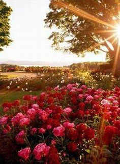 Springflowers in the sun