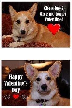 The Daily Corgi: Search results for valentine